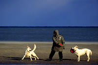 Two large white dogs play with their owner on a beach