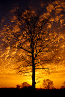 The sun rises behind a leafless tree as clouds appear to replace its leaves